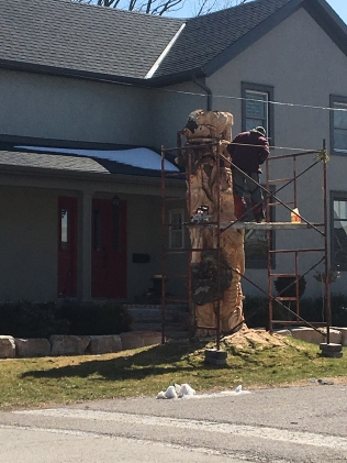 Old tree finds new life as a wood sculpture on Main Street, St. Catharines